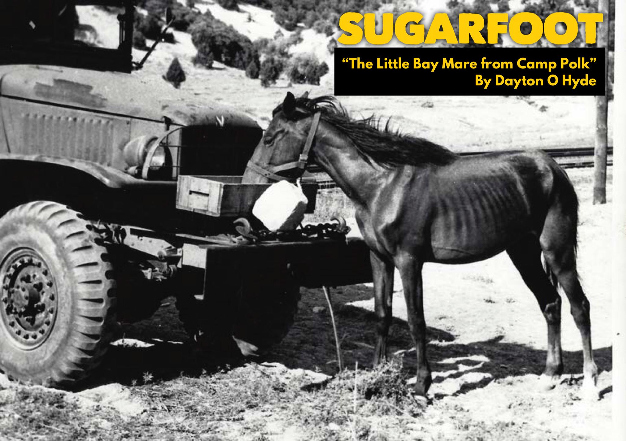 sugarfoot yellow
